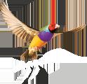 best practice software logo